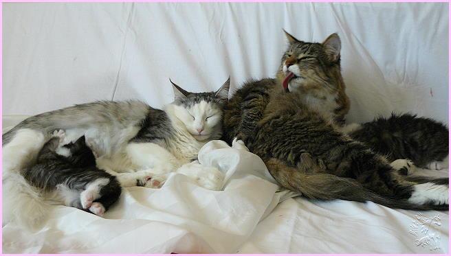 Molly und Mariechen mit ihren Kindern aus dem Jahr 2008