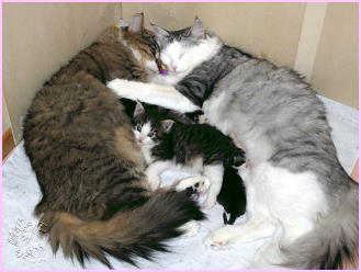 Mariechen mit Molly mit ihren Kindern Nanni 3 Wochen alt und Felix-Wolfram 2 Tage alt