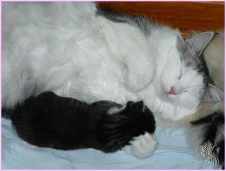 Molly mit Felix-Wolfram (2 Wochen alt)